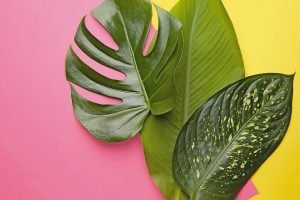 Fresh_tropical_leaves_on_color_background