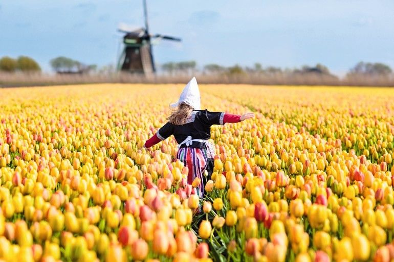 Child_in_tulip_flower_field_with_windmill_in_Holland._Little_Dutch_girl_in_traditional_national_costume,_dress_and_hat,_with_flower_basket._Kid_in_tulips_fields_in_the_Netherlands_at_wind_mill.