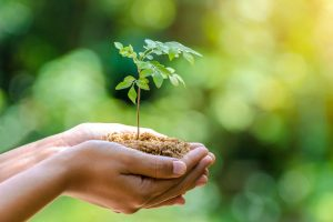 In_the_hands_of_trees_growing_seedlings._Bokeh_green_Background_Female_hand_holding_tree_on_nature_field_grass_Forest_conservation_concept